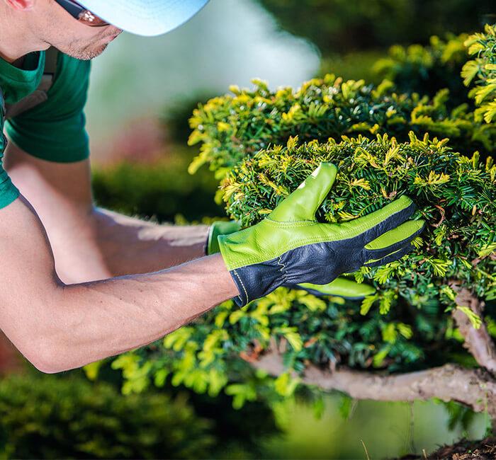 Jardinagem para Condomínio   MTZ – Terceirização de Serviços em Condomínios